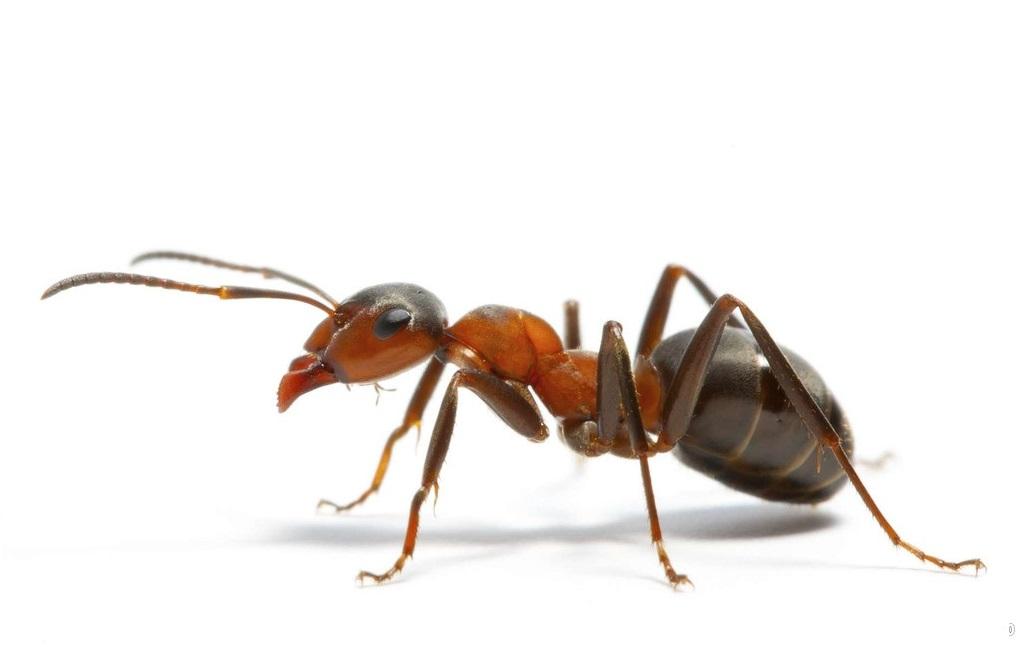 蚂蚁食物图片素材